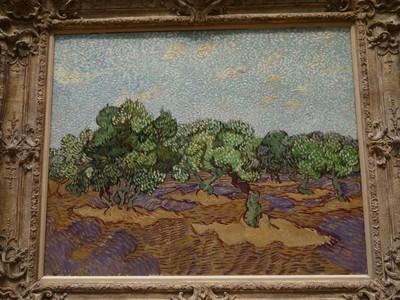 Olive Trees (800x600).jpg